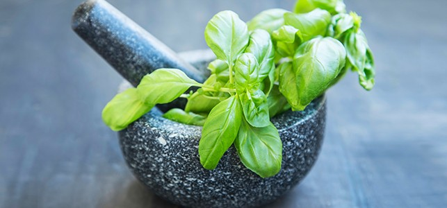 Holy Basil: properties and health benefits!